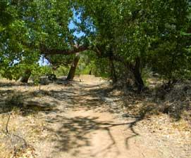 bosque-trail1-271x225