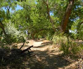 bosque-trail2-271x225